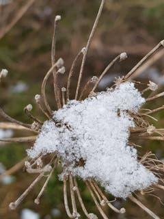 Schneefänger in Sitterdorf. (Bild: Reto Schlegel)