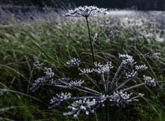 Magisches Morgenlicht, aufgenommen im Andwiler Moos. (Bild: Wolfgang Reisser)