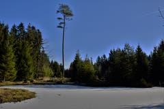 Der Teich im Gulpwald ist zugefroren. Unser Leser Alfred Herzog hofft nun auf etwas Schnee. (Bild: Alfred Herzog (Willisau, 4. Januar 2019))