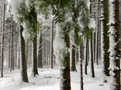 Der verschneite Wald, aufgenommen in Wil. (Bild: Nicolas Giovanettoni)