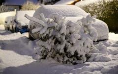 Ein schneebedeckter Tannenbaum liegt in München zur Abholung bereit. (Bild: Matthias Balk/Keystone/DPA (9. Januar 2019))