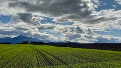 Die letzten Regenwolken verziehen sich. (Bild: Peter Bumbacher, Niederwil, 10. Oktober 2019)