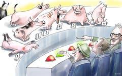 St.Gallen sucht das schönste Ferkel. Zu haarig, zu träge, Flecken an der Schnauze oder gar eine Verletzung: Die Anforderungen an das Bundesrats-Säuli sind hoch. Christian Manser, Präsident der Olma-Tierschau, tut sich schwer mit der Auswahl. Ein wenig erinnert das «Säuli-Casting» an «Germany's Next Topmodel». (Illustration: Corinne Bromundt)