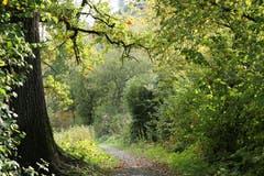 Farbenspiel in Schein der Herbstsonne. (Bild: Irene Wanner, Schötz, 10. Oktober 2019)