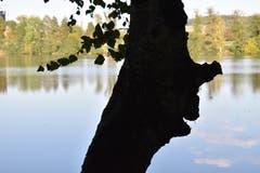 Der Wächter vom Soppensee. Oder gar ein Verwandter des Erlkönigs? (Bild: Peter Lohri, Wolhusen)