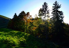 Herbstwald im Gegenlicht der untergehenden Sonne. (Bild: Thomas Ammann)