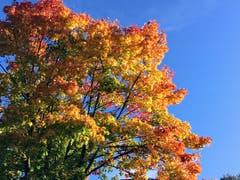 Herbstfarben in Montlingen. (Bild: Toni Sieber)
