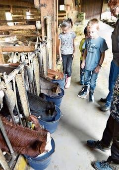 Die Chälbli in Malans trinken ihre Milch, und auf Matug werden die Backwaren mit Ei bepinselt. (Bilder Heini Schwendener)