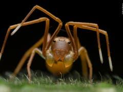 Unter den Tierporträts überzeugte dieses Foto einer Krabbenspinne, die sich als Ameise tarnt. Ripan Biswas fotografierte die Spinne im Buxy Tiger Reserve in Indien. (Bild: Ripan Biswas, Indien)