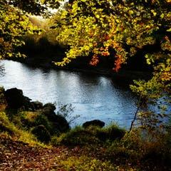Bunter Herbst an der Thur in Bischofszell. (Bild: Reto Schlegel)