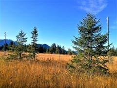 Goldener Herbsttag bei strahlendem Sonnenschein. (Bild: Urs Gutfleisch, Entlebuch, 16. Oktober 2019)