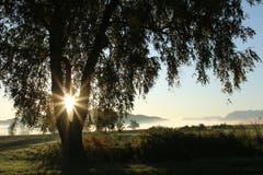 Die Sonnenstrahlen leuchten durch den Baumstamm. (Bild: Irene Wanner, Wauwiler Moos, 16. Oktober 2019)