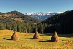 Diese formschönen Tristen stehen etwas unterhalb vom Sattelpass Giswil. Im Hintergrund sind der Hutstock, der Titlis und die die Wendenstöcke zu sehen. (Bild: Niklaus Rohrer, 16. Oktober 2019)