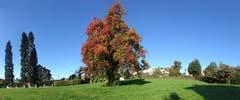 Wittenbacher Herbstgrüsse! (Bild: Walter Schmidt)