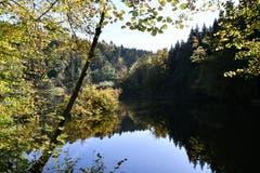 Der Herbst ist angekommen am Steinhauser Waldweiher. (Bild: Werner Walker, Steinhausen, 17. Oktober 2019)