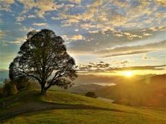 Was für ein traumhafter Sonnenaufgang heute Morgen auf dem Holderchäppeli. Einfach nur zum Geniessen. (Bild: Urs Gutfleisch, Holderchäppeli, 18. Oktober 2019)
