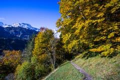 Goldiger Oktober in Engelberg. (Bild: Vinzenz Blum, 17. Oktober 2019)