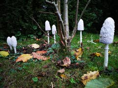 Pilze im Garten. (Bild: Christine Vanoli, Reiden, 20. Oktober 2019)
