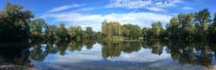 Herbststimmung am alten Rhein bei Diepoldsau. (Bild: Toni Sieber)