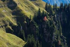 Der Herbst hält Einzug in die Bergwälder oder ganz einfach: Es herbschtelet am Hinterrugg. (Bild: Franz Häusler)