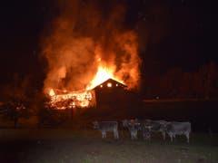 Die Milchkühe befanden sich zum Zeitpunkt des Brandausbruchs nicht im Stall. (Bild: Kapo GR)