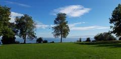 Uferlandschaft von Romanshorn im Licht eines kühlen Herbsttags. (Bild: Klaus Businger)
