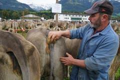 Auch Kühe wollen sich zur Misswahl von Kopf bis Schwanz so schön wie möglich präsentieren: Das weiss Sepp Flück aus St. Niklausen nur zu genau. (Bild: Romano Cuonz, Sarnen, 4. Oktober 2019)