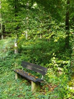 Herbstbank im Bischofszeller Wald. (Bild: Reto Schlegel)