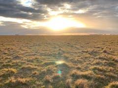 Auf Versuchsflächen wie dieser im nördlichen Argentinien untersuchten Forschende der WSL mit internationalen Kollegen den Stickstoffgehalt im Grasland weltweit. (Bild: Pedro Tognetti)
