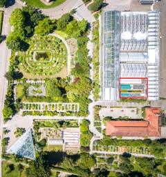 Der Botanische Garten von oben: Der Standort des neuen Vortragsraum ist rot umrandet. Im Luftbild gut zu erkennen ist links das Dreieck des Alpinariums, rechts die Orangerie mit Büroanbau und links neben dem Standort des Vortragsraums das Tropenhaus. Am linken Bildrand befindet sich die Brauer-, am oberen Bildrand die Stephanshornstrasse. (Bild: Urs Bucher - 26. Juli 2019)