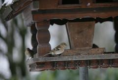 Das Vogelhaus wird rege von Meisen und Spatzen besucht. (Bild: PD)