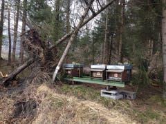 Diese Bienenkästen nahe der Autobahn in Sennwald hatten Glück, nicht vom umstürzenden Baum getroffen zu werden. (Bild: PD)