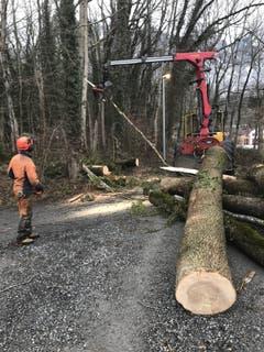 Die Zufahrt zur Hammerschmiede musste von der Forstgemeinschaft Sennwald freigeräumt werden. (Bild: PD)