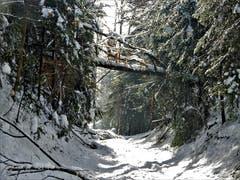 Schon wieder sind im Wald gewaltige Schäden zu beklagen. Aufgenommen im Fuchsenried in Udligenswil. (Bild: Margrith Imhof-Röthlin, 9. Februar 2019)