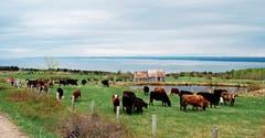 Wasserreiche Landschaften prägen die Region Charlevoix. (Bild: Gerd Braune)