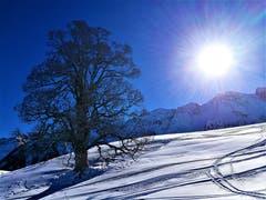 Strahlender Sonnenschein auf die Winterlandschaft. (Bild: Urs Gutfleisch, Sörenberg, 13. Februar 2019)