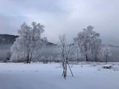 Der Winter ist ein wahrer Künstler. (Bild: Ernst Henggeler, Aegeribad Oberägeri, Februar 2019)
