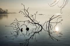 Die Morgenstille am Zugersee. (Bild: Anita Imfeld-Leu, Zug, 15. Februar 2019)