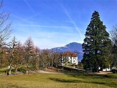 Die Villa Krämerstein mit der Baumallee am Seebecken des Vierwaldstättersees. (Bild: Urs Gutfleisch, Horw, 20. Februar 2019)