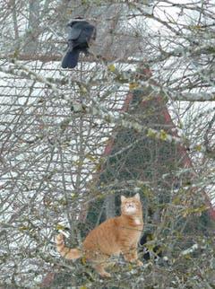 Begegnung zwischen Katze und Krähe auf Drei Weihern. (Bild: Franz Steiner)