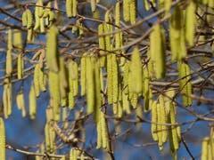 Die Temperaturen steigen. Der Frühling naht und er kommt immer näher. (Bild: Josef Lustenberger, Wolhusen, 21. Februar 2019)