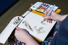 Nebenbei erweitern die Zeichnenden ihre Artenkenntnisse.