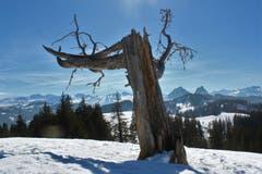 Auf der Schneeschuhtour zwischen Biberegg und Alptal: Blick vom Grat Hoch Tändli in Richtung Süden über die Urner Alpen und Mythen. (Bild: André Guntern)