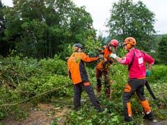 Marly im Jahr 2014: Förster fällen Bäume, nachdem der Asiatische Laubholzbockkäfer entdeckt worden ist. (Bild: KEYSTONE/JEAN-CHRISTOPHE BOTT)