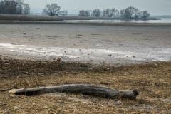 Noch fehlt das Wasser am Rohrspitz. (Bild: Hans-Jörg Nüesch)