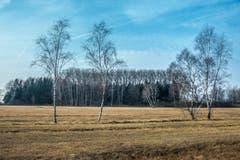Noch fehlt das Grün im Rheindelta. (Bild: Hans-Jörg Nüesch)