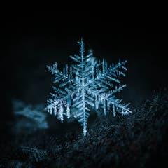 Eine einzelne Schneeflocke, mit der typischen 6-strahligen Form. (Bild: Petra Jung, Hämikon, 3. Februar 2019)