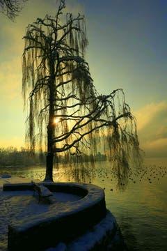 Morgenstimmung am See. (Bild: Buholzer Walter, Luzern, 4. Februar 2019)