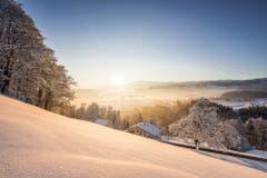 Wunderschöne verschneite Landschaft im Morgenlicht bei Kirchberg. (Bild: Marc Bollhalder)