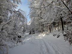 Einfach nur märchenhaft ist diese herrliche Schneelandschaft. Aufgenommen auf dem Höhenweg in Meggen. (Bild: Margrith Imhof-Röthlin, 5. Februar 2019)